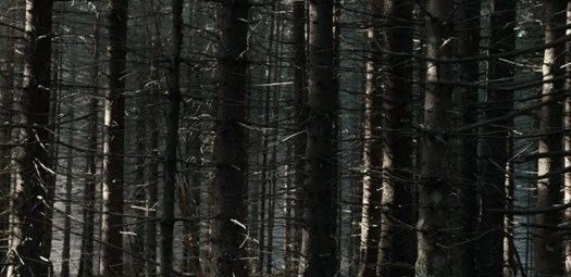 The uncanny forest of The Ritual.