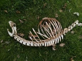 ossa-8