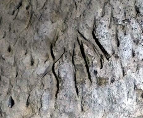 grotta-numeri-etruschi-10