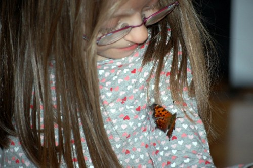 butterfly on Frances Nov 2009
