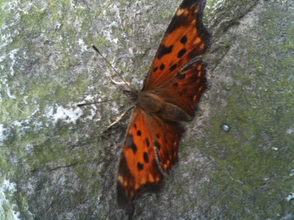 butterfly on boulder