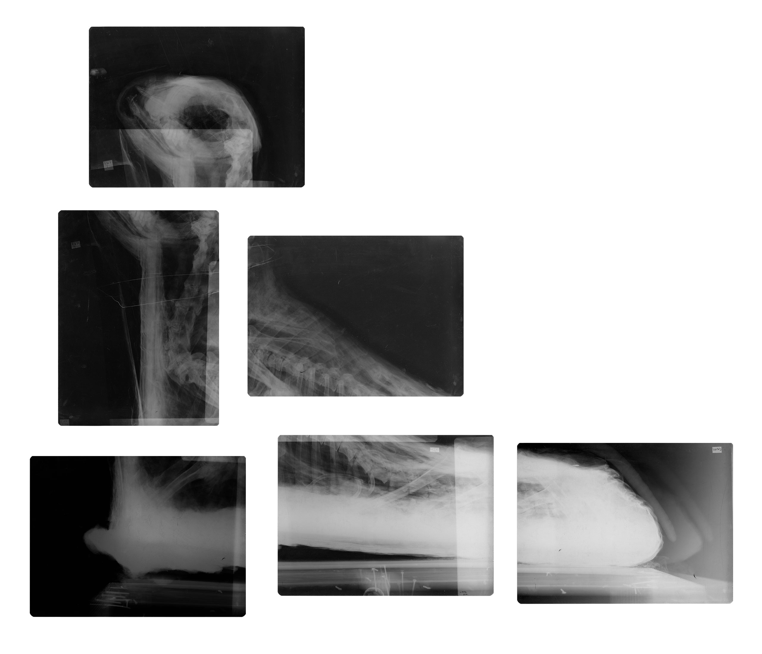 x-ray of a ram mummy in Egypt