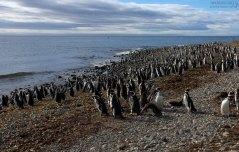 Пингвиний пляж.