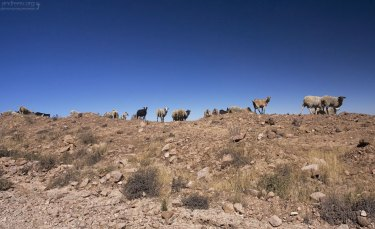 Козы и овцы вышли считаться :)