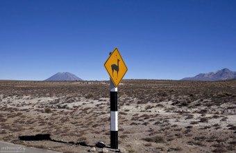 Знак, предупреждающий о появлении гуанако.