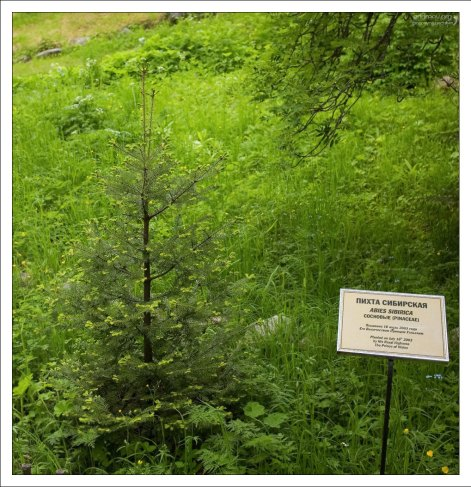 Ботанический сад на Большом Соловецком острове был основан в 1822 году.