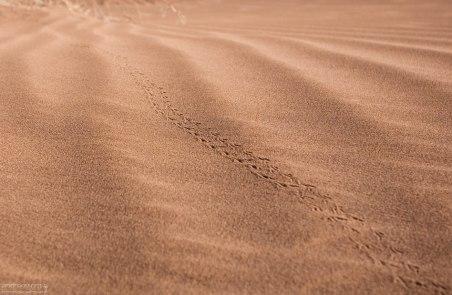 Кто-то прыгал по песочку :) Анти-Атлас.