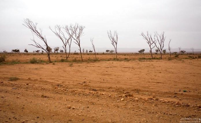 Каменистая пустыня хамада на пути к Атлантике.