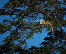 Игуана в нирване.