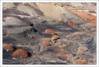 В таких условиях выживают только креозотовые кусты, с корневой системой, достигающей 100 метров.