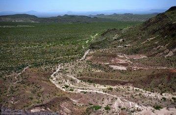 Пустыня Chihuahuan, покрытая креозотовыми кустами.