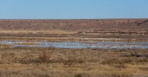 Птичья колония в заповеднике Bitter Lake National Wildlife Refuge.