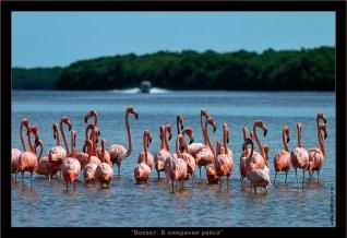 Фламинго собрались эмигрировать из родного озера в далекие края. Ждут попутки.