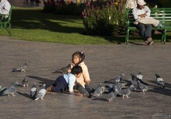 Карапузы возятся с голубями.