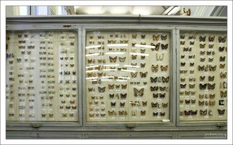 В экспозиции показано 1370 видов бабочек. Зоологический музей.