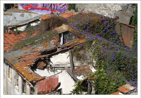Дом под снос и цветочки.