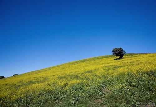 Пейзаж - мечта минималиста.