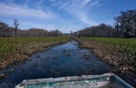 Плоскодонка пытается пробиться через заросшую часть озера.