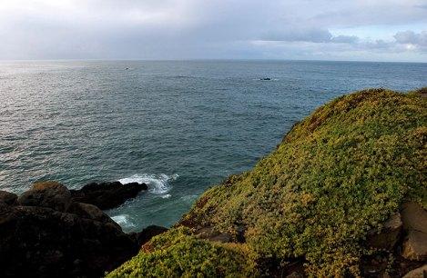 Тихий океан с высоты маяка Battery Point Lighthouse.
