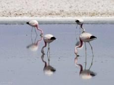 Квадратура фламинго.