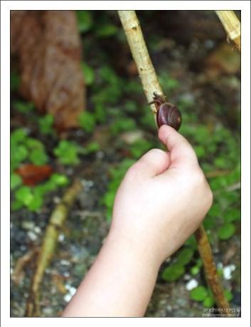 Щекотка для улитки. Заповедник Flower Forest.