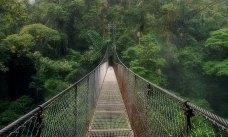 Подвесной мост под дождем (hanging bridge).
