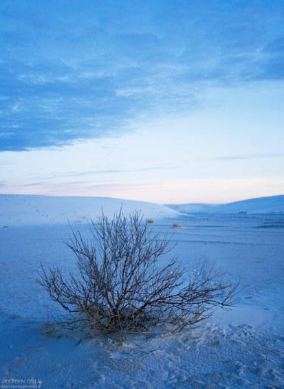 Впавший в зимнюю спячку куст Hoary Rosemarymint.
