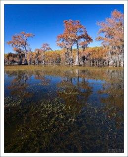 Вся растительность на поверхности озера скрывается на зиму под воду.
