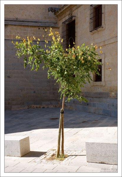 Китайские фонарики физалиса (Chinese lantern tree). Сеговия, Испания.
