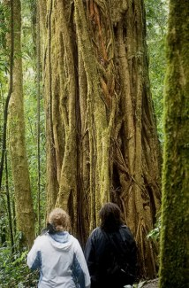 Катя и гид Андреас из National Geographic перед деревом Strangler Fig (Фига-душитель).