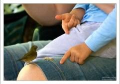 - Ешь, птичка, не стыдись! Rocklands Bird Sanctuary.