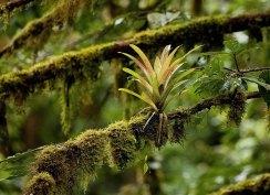 Бромелия-эпифит - растение, не нуждающееся в почве.