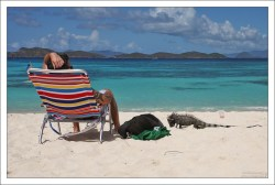 Игуана выпрашивает еду на пляже.