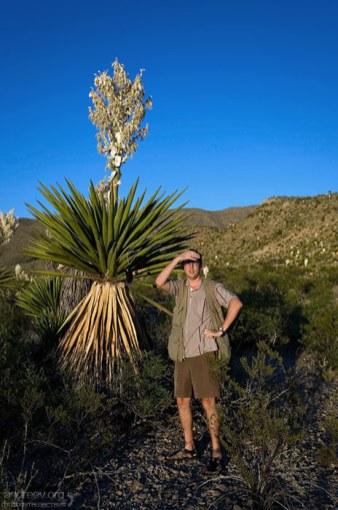 Средняя юкка с колбой-цветком выше человека раза в два.