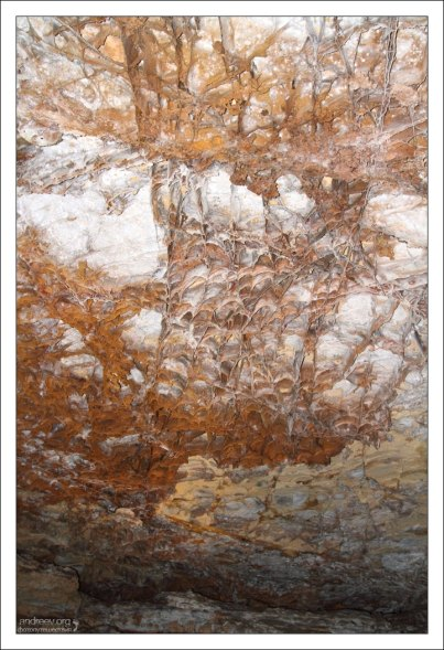 Ячеистая структура на потолке в пещере Wind Cave.