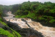 7 священных водопадов ('Ohe'o Gulch), превращенных в одну бурляющую реку.