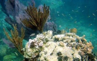 Абсолютно порзрачная, зеленая вода у кораллового рифа. Атолл Turneffe.