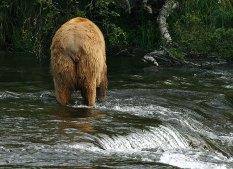 Отношение медведей ко всем остальным.
