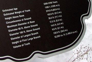 """Краткая информация о секвойе """"The General Sherman tree"""". Обратите внимание на возраст!!!"""