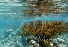 Опасный огненный коралл (Fire coral). От ожогов хорошо помогает уксус.