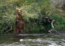 Вдруг из лесу вышел медведь...