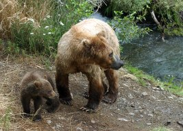 Медведица с малышом.