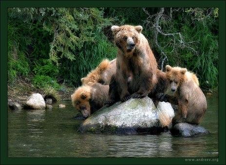 Медвежья идиллия. Медведица-мать в окружении своих медвежат. Семья отдыхает после активной рыбной ловли на водопаде. Медвежатам здесь чуть больше года.
