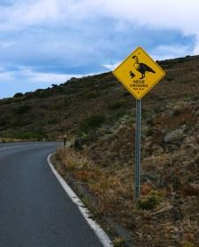 Знак, предупреждающий о возможном появлении гавайских гусей - нене.