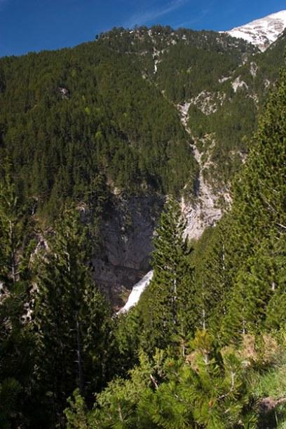 Можжевеловые и сосновые леса ближе к вершине Олимпа.