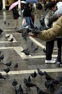 Обнаглевшие голуби. Площадь Piazza San Marco.