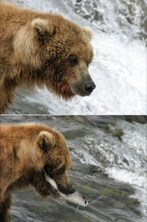 Медведица-мать, довольная и с лососем.