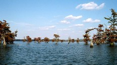 Озеро Reelfoot Lake.