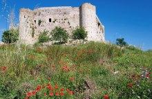 Весенние маки и замок Chlemoutsi.