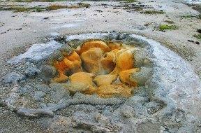"""Гейзер """"Ракушка"""" (Shell Geyser) в Бисквитном бассейне."""